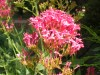 Jardinero,Dise�o de Jardines,Paisajismo,Mantencion de jardines